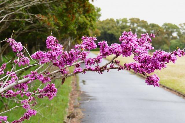 富浜緑地で見られる植物♪_d0338682_16450382.jpg