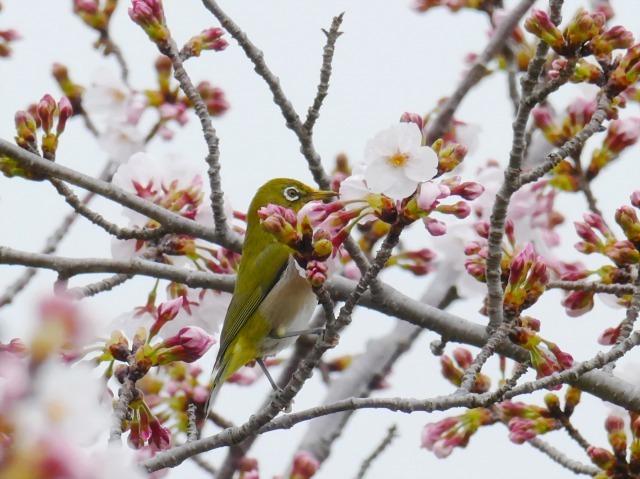 富浜緑地で見られる植物♪_d0338682_16550970.jpg