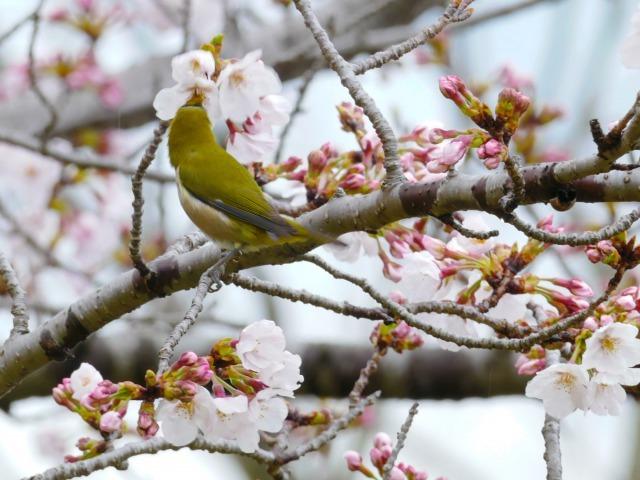 富浜緑地で見られる植物♪_d0338682_16551781.jpg