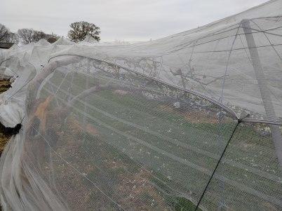 積雪により久喜市の梨に大きな被害 適切な対応を R2年4月1日_d0084783_10024458.jpg