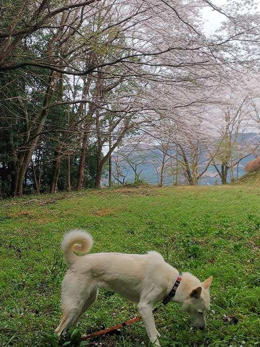 花見犬_e0303187_21320613.jpg