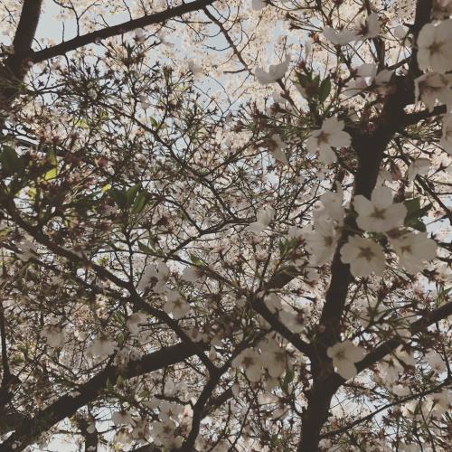 4月_e0123401_15423677.jpg