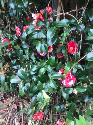 コロナウィルスとは無縁の春_f0101201_15221141.jpg