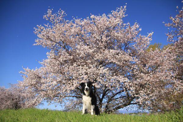 今日もお花見散歩_d0224111_10491546.jpg