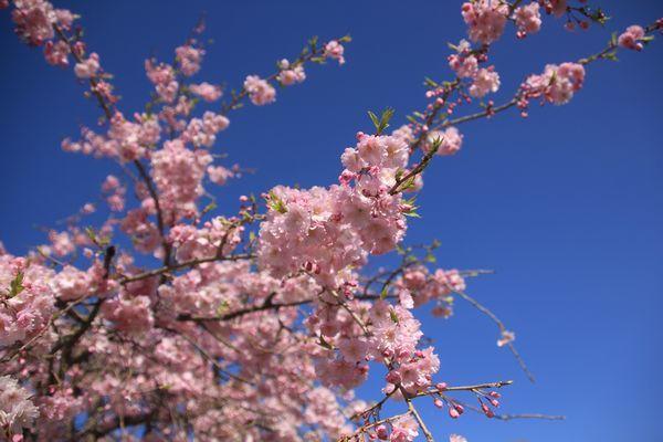 今日もお花見散歩_d0224111_10542618.jpg