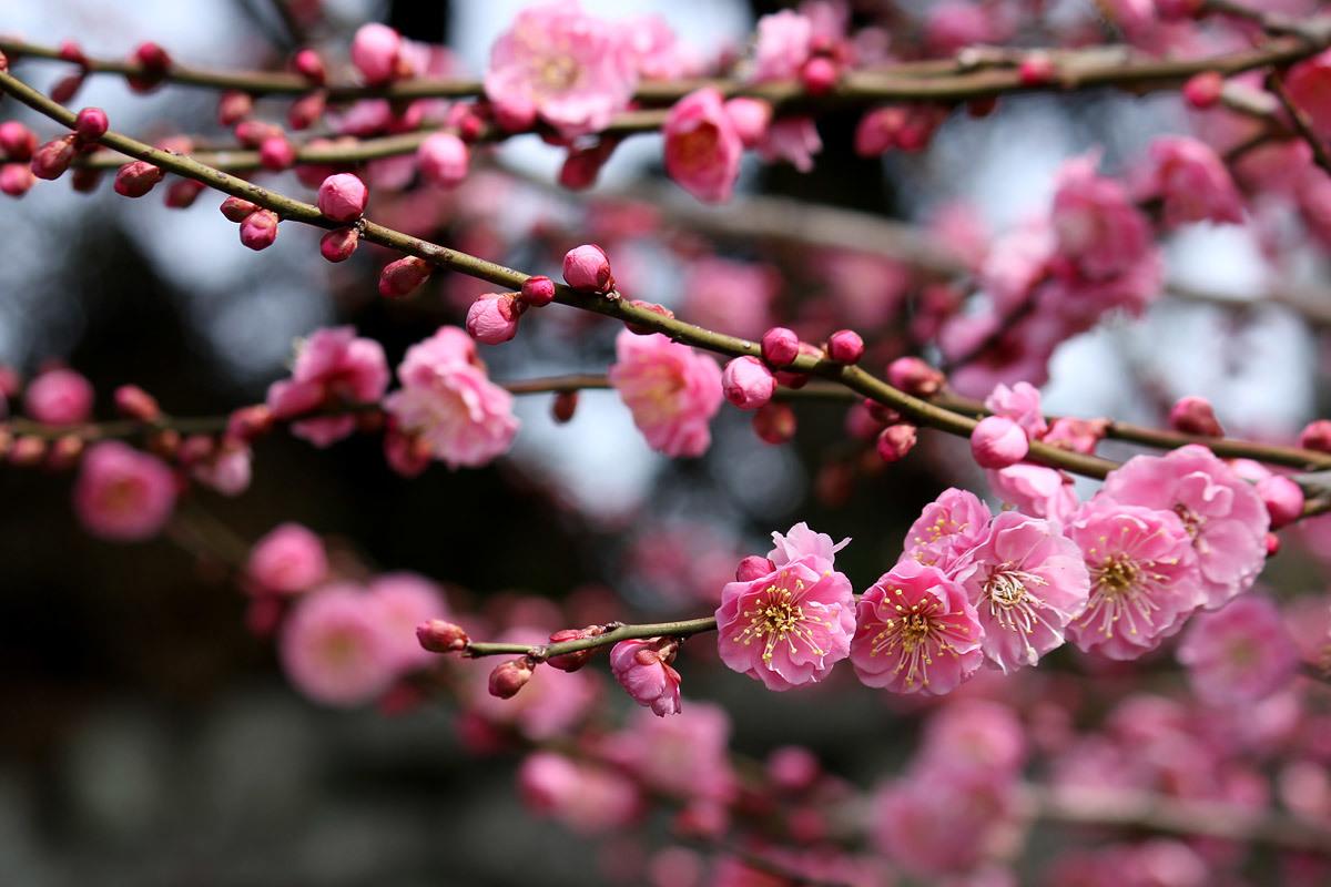 4月2日(木)_f0066211_12131403.jpg