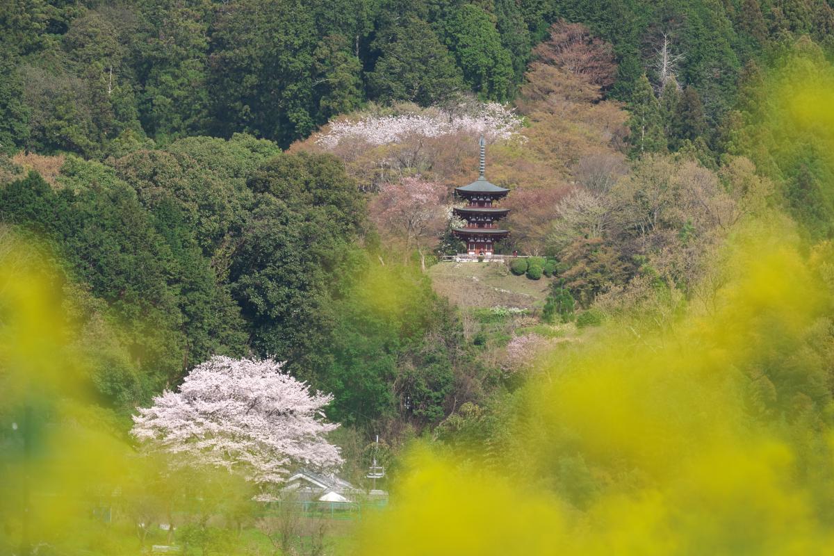 岡寺の春_b0408917_17373903.jpg