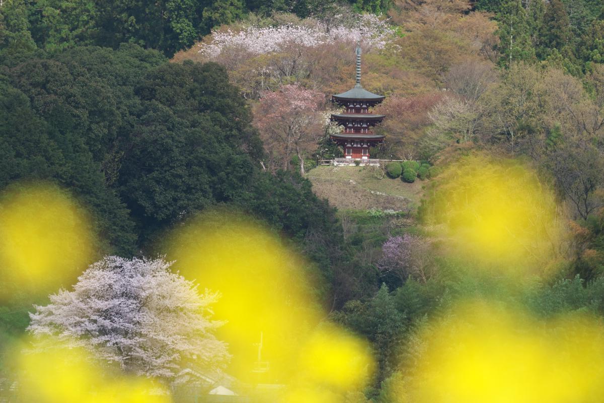 岡寺の春_b0408917_17383258.jpg
