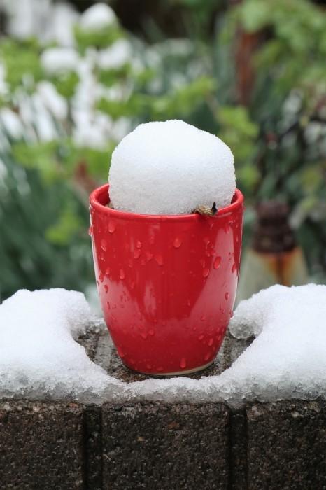 春の雪が。。。_d0150720_11163424.jpg