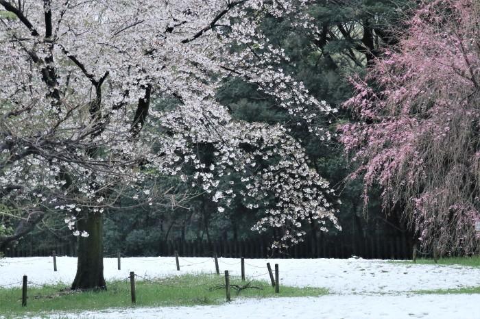 春の雪が。。。_d0150720_11181991.jpg