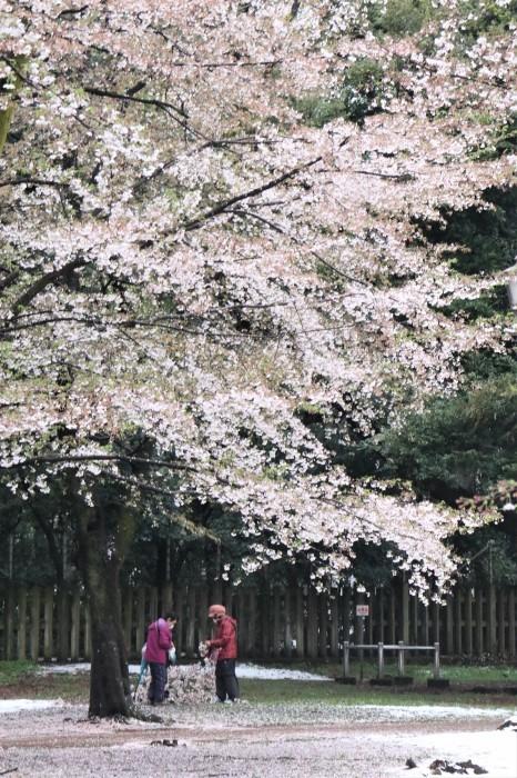 春の雪が。。。_d0150720_11190723.jpg