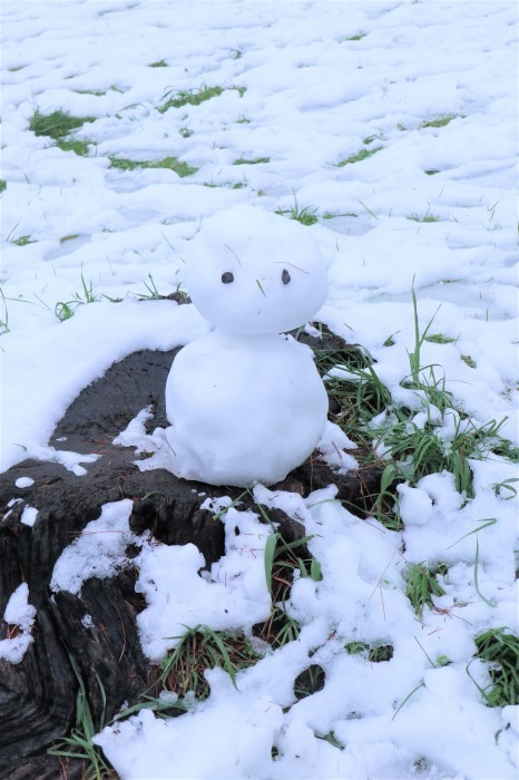 春の雪が。。。_d0150720_11194966.jpg
