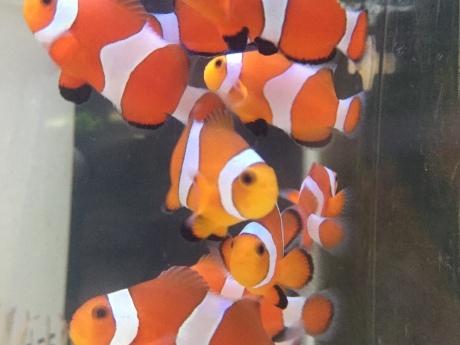200402 海水魚 熱帯魚 金魚 水草_f0189122_12323792.jpeg