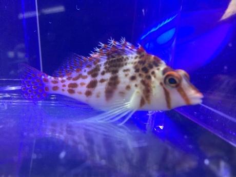 200402 海水魚 熱帯魚 金魚 水草_f0189122_12325985.jpeg