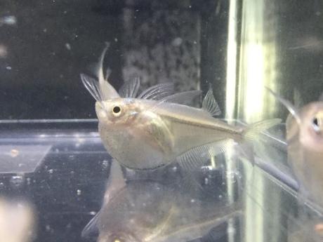 200402 海水魚 熱帯魚 金魚 水草_f0189122_12333235.jpeg