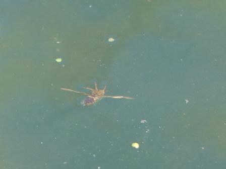 水の中のいきものたちも、草花も動き始めています_a0123836_17234991.jpg