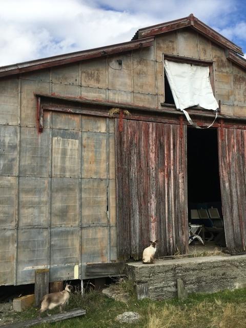 うちの猫たちとコロナ_b0334436_07043733.jpg