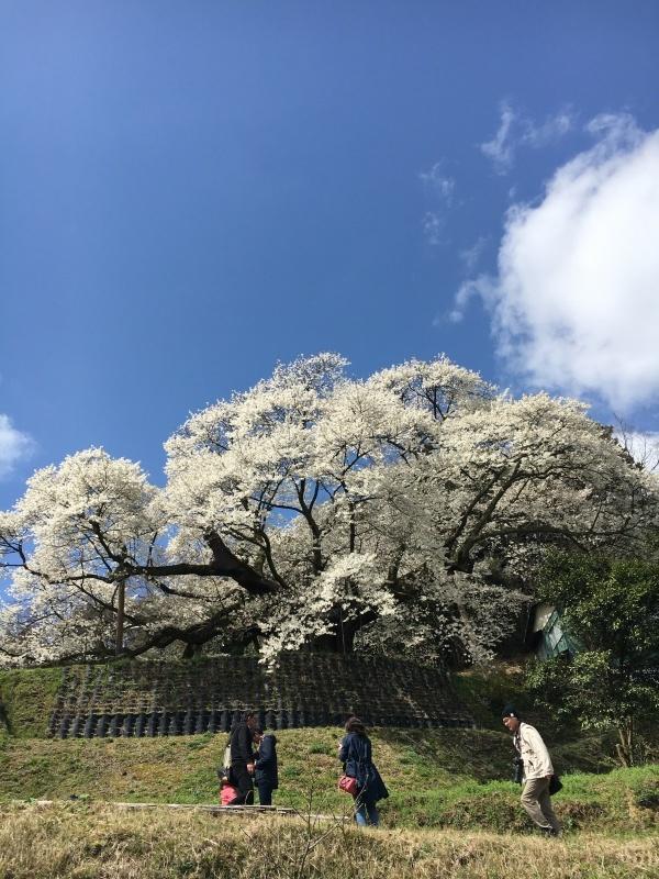 4月 桜_e0110940_09004126.jpeg