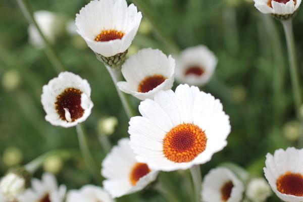 庭に咲く花_f0053342_11525024.jpg
