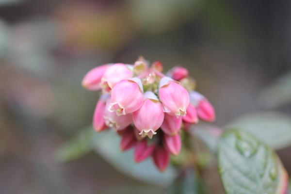 庭に咲く花_f0053342_11534003.jpg