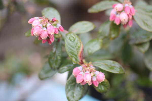 庭に咲く花_f0053342_11535338.jpg