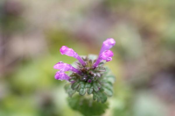 庭に咲く花_f0053342_11540729.jpg