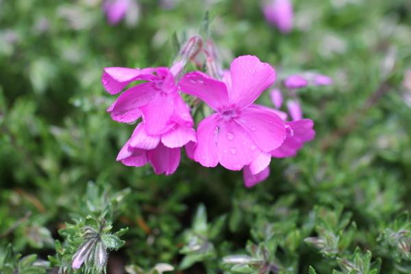 庭に咲く花_f0053342_11550212.jpg