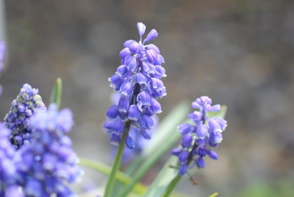 庭に咲く花_f0053342_11551375.jpg