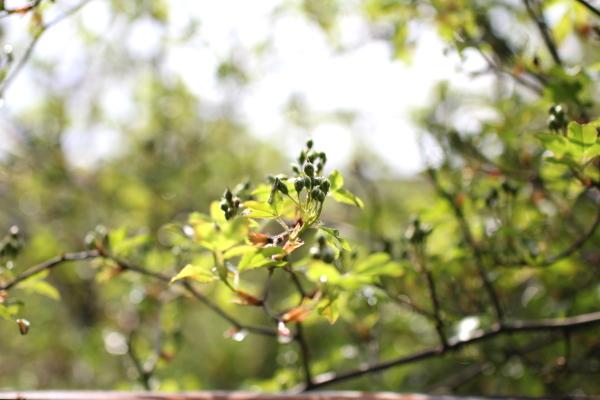 庭に咲く花_f0053342_11560569.jpg