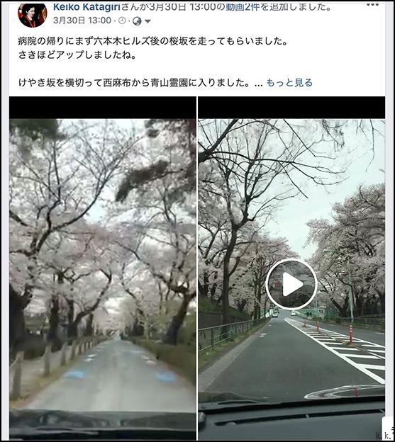 遠くの桜は今日もまだ散り終わらずに残っているようです_a0031363_03104063.jpg