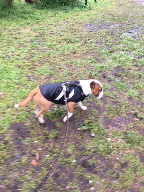 雨散歩でスタート_b0392963_19281345.jpg