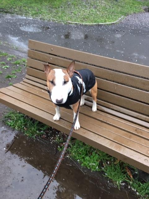 雨散歩でスタート_b0392963_19281500.jpg