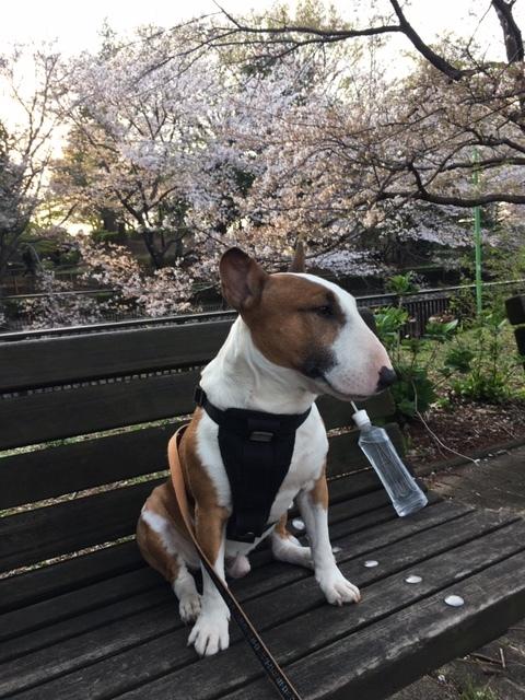 桜は満開+_b0392963_20090626.jpg