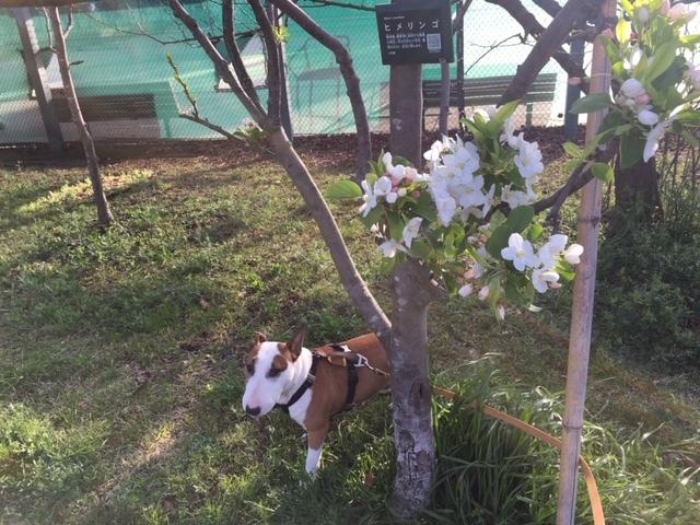 桜は満開+_b0392963_20095186.jpg