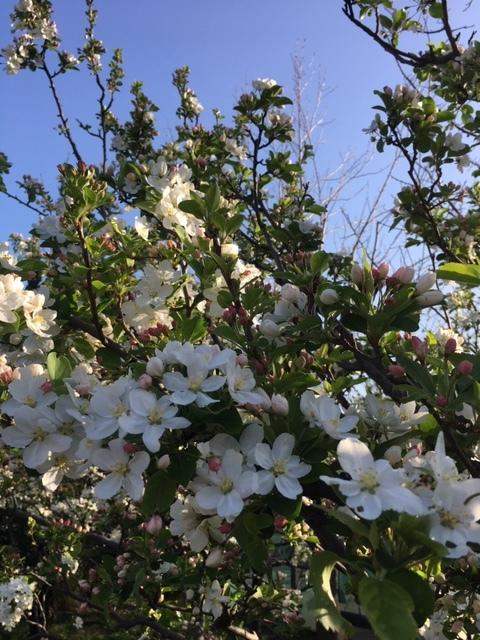 桜は満開+_b0392963_20124394.jpg