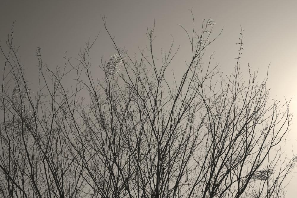 芽吹き始めた街路樹_d0349265_16302794.jpg
