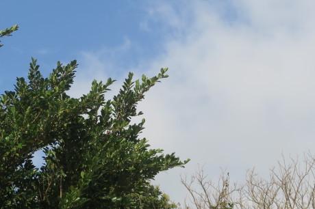久し振りのお天気です_e0292172_08071115.jpeg