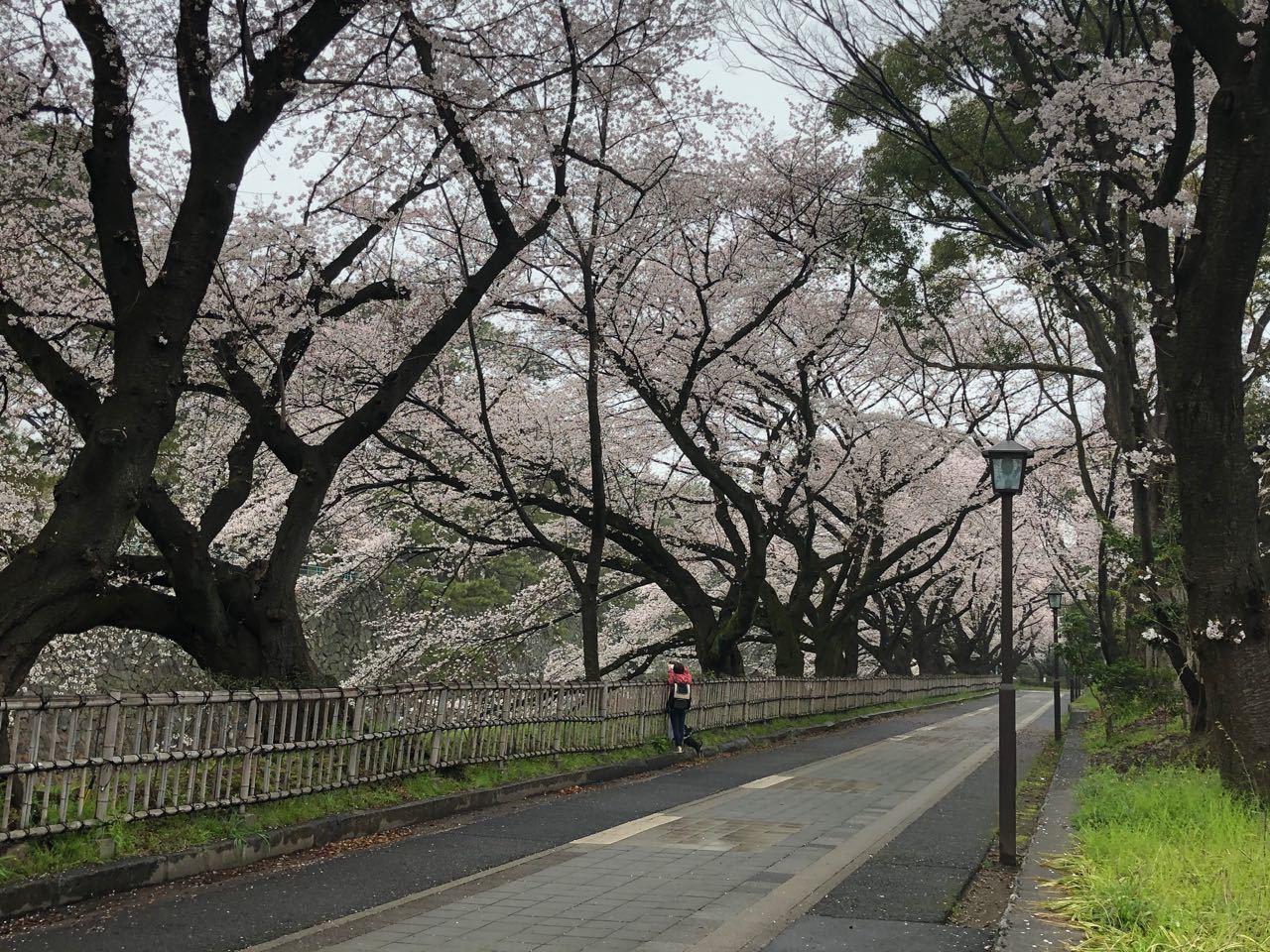 2020.03.31「お花見?」_c0197974_01131123.jpg