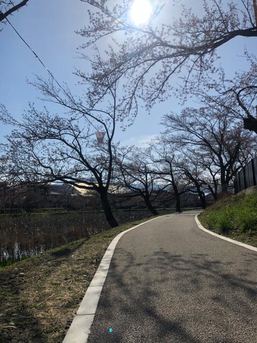 高田城址公園の桜_d0182179_06170655.jpg