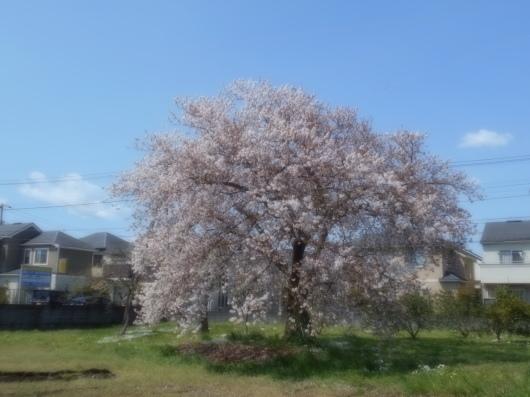 天気晴朗なれど 2020年4月2日_c0069380_19275824.jpg