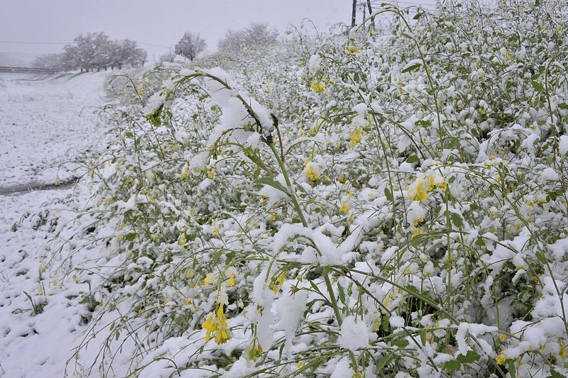小畔川便り(雪の日の前後の小畔川:2020/3/28.29)_f0031682_16113177.jpg