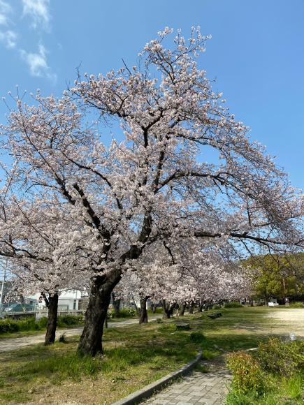 4月2日(木曜日)通販のお客様 どどドーンとお知らせ_f0287094_15200661.jpg