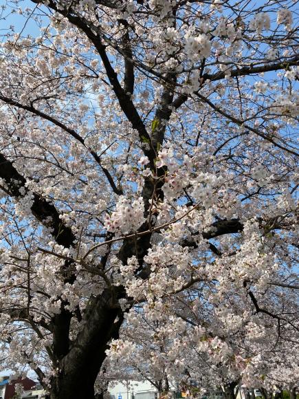 4月2日(木曜日)通販のお客様 どどドーンとお知らせ_f0287094_15200819.jpg