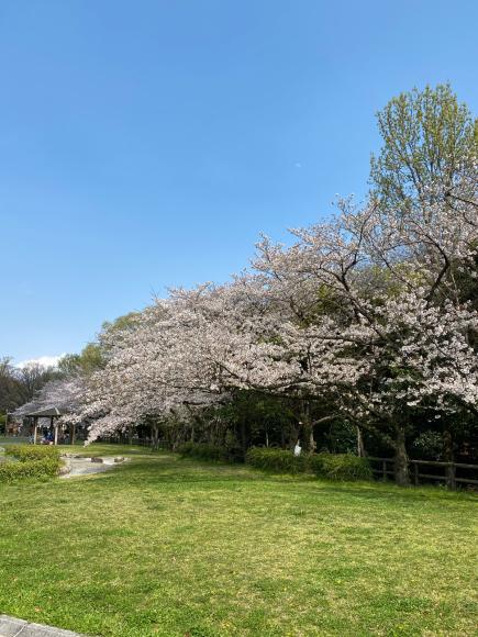4月2日(木曜日)通販のお客様 どどドーンとお知らせ_f0287094_15201123.jpg