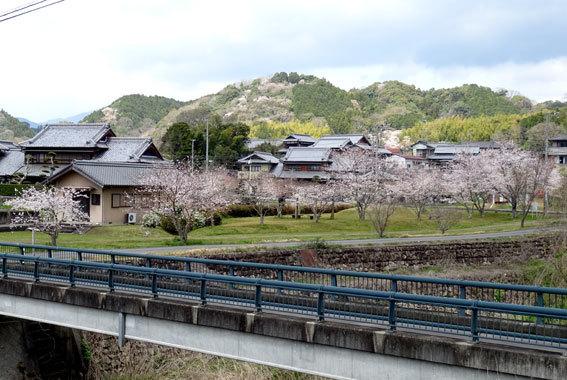 どこを向いても桜の榊原温泉_b0145296_16565127.jpg