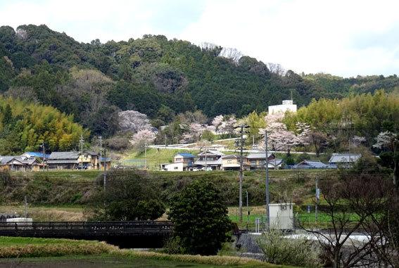どこを向いても桜の榊原温泉_b0145296_16565498.jpg