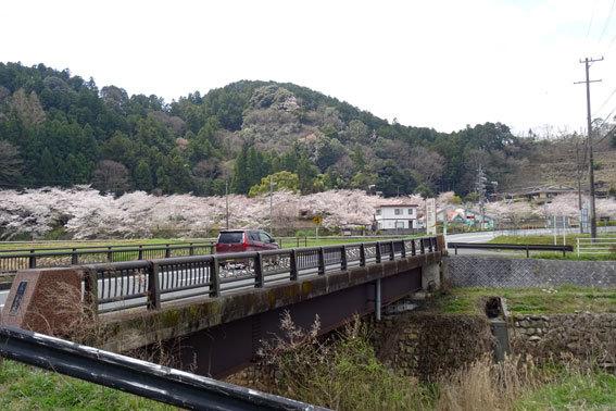 どこを向いても桜の榊原温泉_b0145296_16565885.jpg