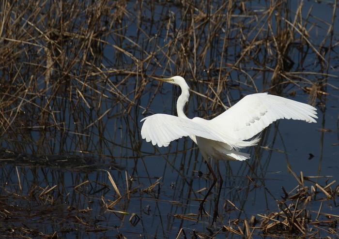 真っ白な羽がきれい~!_c0113597_13095700.jpg