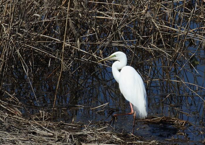 真っ白な羽がきれい~!_c0113597_13332978.jpg