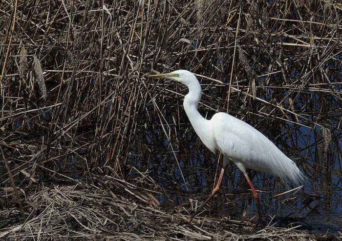 真っ白な羽がきれい~!_c0113597_13335283.jpg